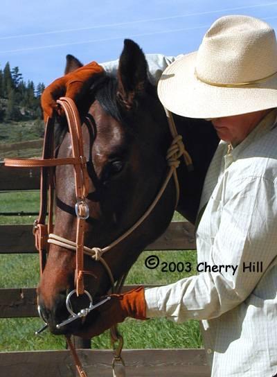 Horse Training - Proper Bridling Position