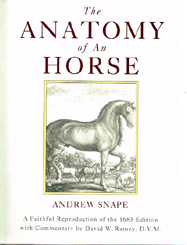 Anatomy-of-an-Horse-245h