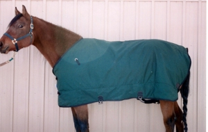 Visit our Tack Barn where we have items that are new and used once for photo shoots - all at very low prices.